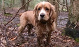 muddydog