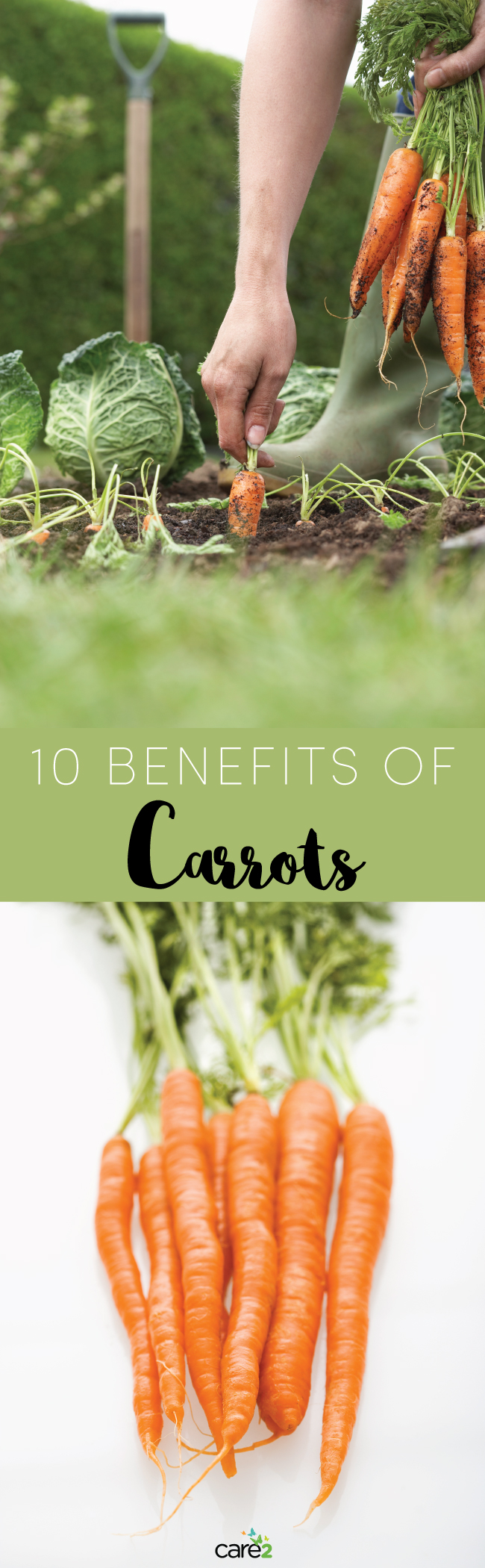 10 Benefits of Carrots: The Crunchy Powerfood