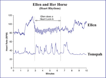 Ellen and Tonopah's HRV patterns