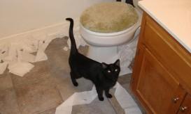 catbathroom