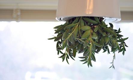 upside down planter