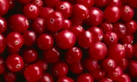 cranberry horizontal