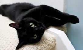 black-cat-lyingdown