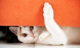 cat-hiding-playful