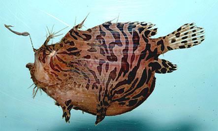 Deep Sea Anglerfish: Losing Yourself in Love