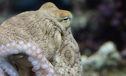Day Octopus: Keep Your Distance
