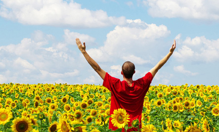 Man in sunflower field