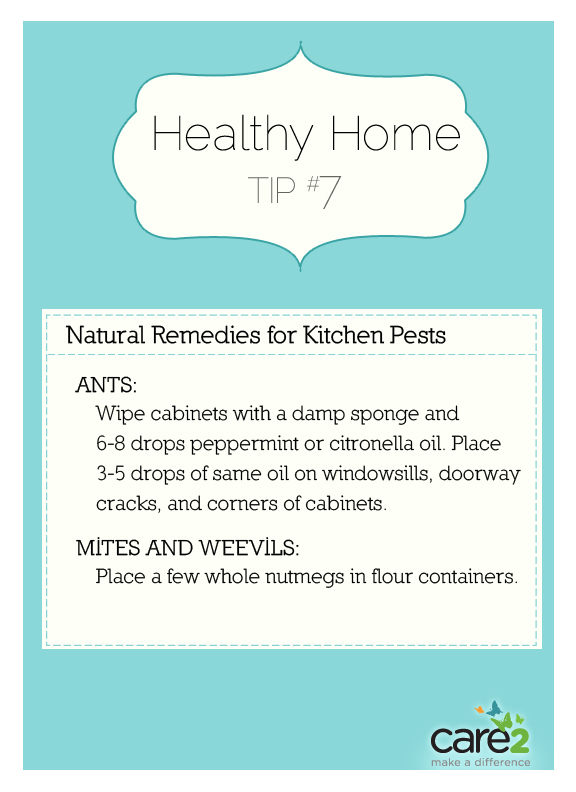 Natural Remedies For Kitchen Pests | Care2 Healthy Living