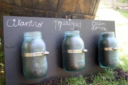 mason jar seed starters