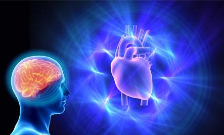Illustration-Heart/Brain