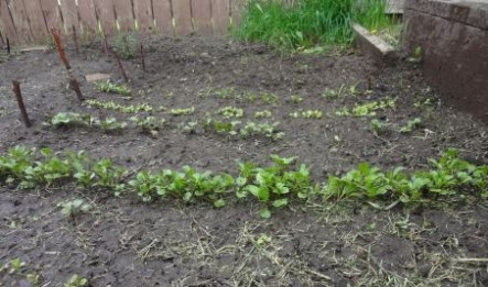 garden Real Food From the Earth
