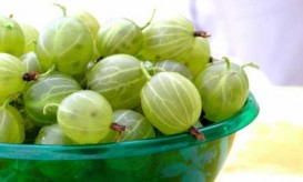 green-gooseberries-bowl