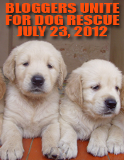 bloggers-dog-rescue