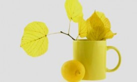 Still-life with yellow leaves
