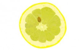 lemon single slice