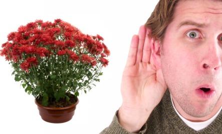 listening to plants