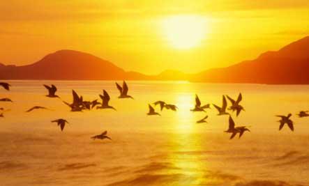 Observación de Aves: Sunset Birds | Pájaros & amp; Blooms Magazine
