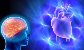 heart_brain