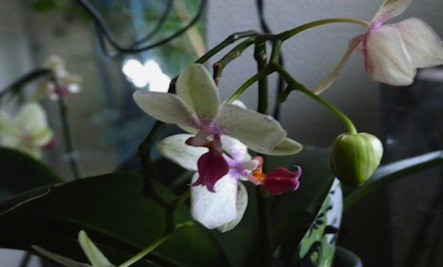 700_orchid-7.jpg & 5 Simple Ways To Keep An Orchid Alive u0026 Thriving | Care2 Healthy ... azcodes.com