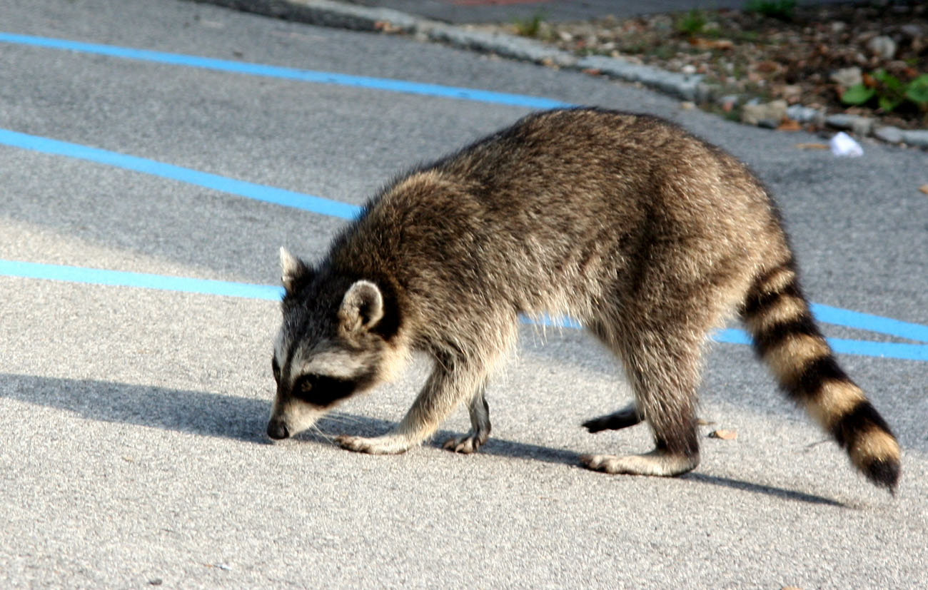 what to do when you encounter a wild animal care2 healthy living