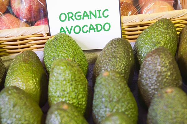 superfood organic avocado