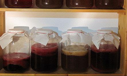 Foods for Immune Health: Kombucha