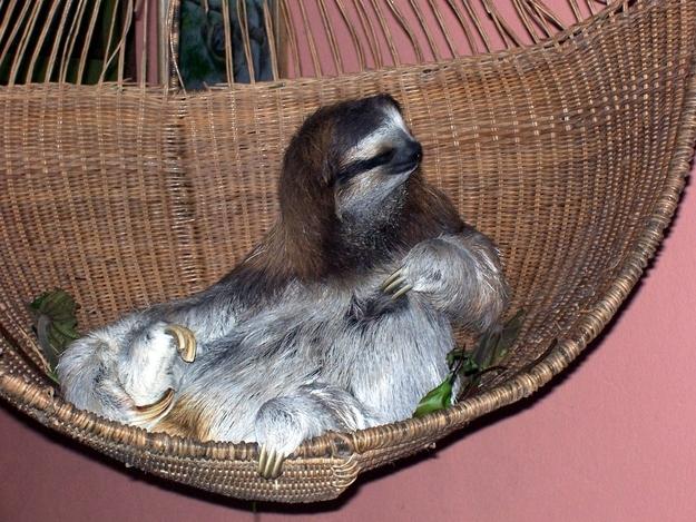 10 Cute Animals Relaxing in Hammocks