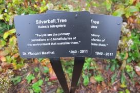 IMG_0540 Silverbell tree tag Maathai WO OCT 2012