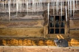 icicle cat