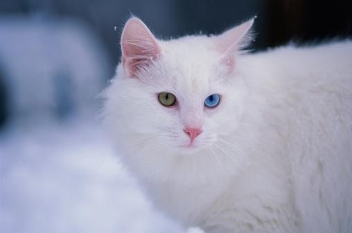 venus cat in snow care2 healthy living