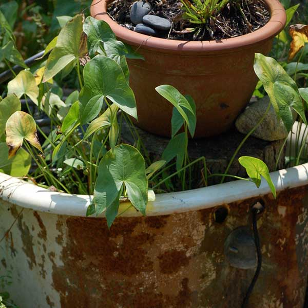 Unusual Container Garden Ideas | Care2 Healthy Living