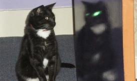 mirror cat 1