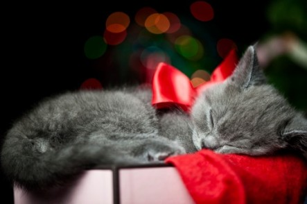 xmas kitty with bow sleeping