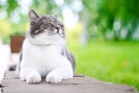 sunning cat