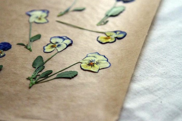 How to make beautiful pressed flowers care2 healthy living above mightylinksfo