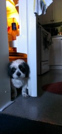 dog-fridge