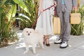 retro dog travel
