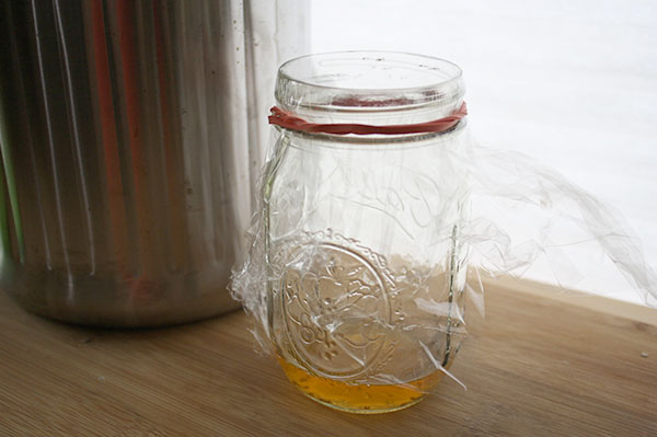 vinegar fruit fly trap