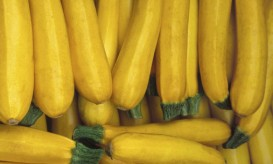yellowsummersquash
