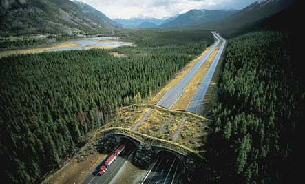 7 amazing overpasses for animals care2 healthy living