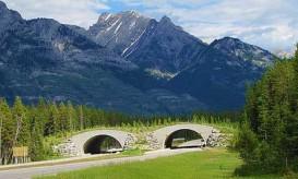 banff-overpass-jimsawthat