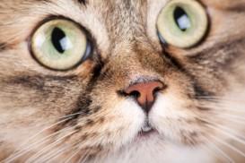 cat nose eyes
