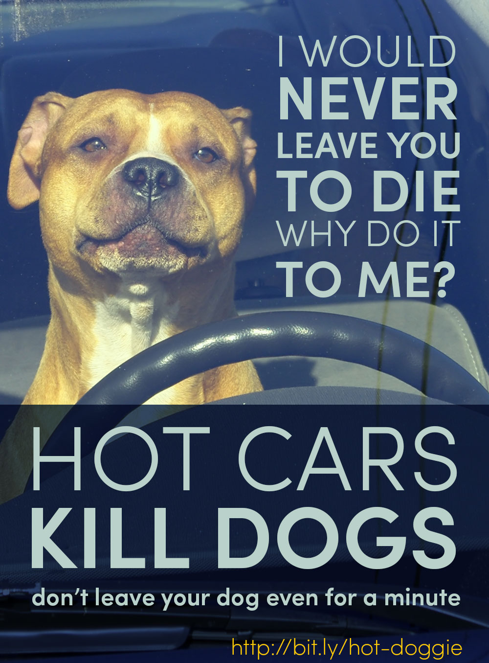 Hot cars kill dogs. Don't leave your dog in a hot car, even for a minute.