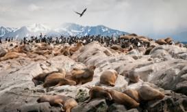 penguinssealions