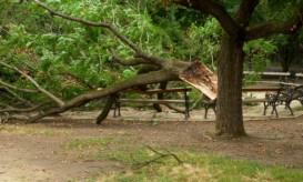 strucktree
