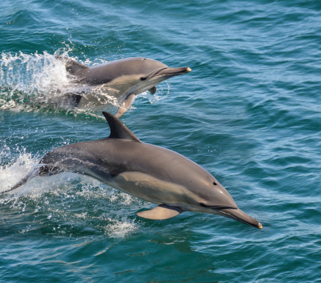Dolphins are known to show altruism. They will stay with injured or ill pod mates, even helping them to breathe by bringing them to the surface if needed.