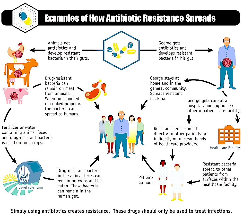 human resistance to antibiotics