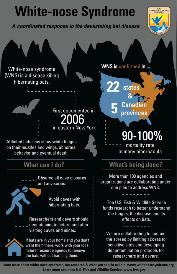 bat infographic