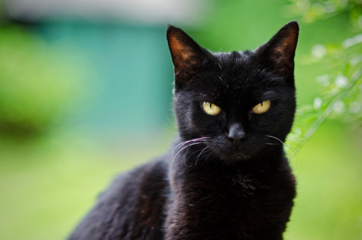 Black Cats Are Beautiful | Care2 Healthy Living