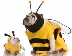 bulldog bumblebees